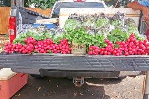 Koloa Farmer's Market Kauai