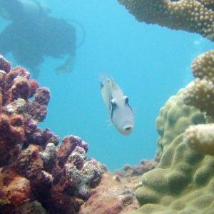 Scuba and snorkel tours kauai