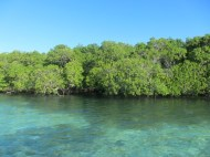 Excursion dans le Grand Cul-De-Sac-Marin, Mangrove