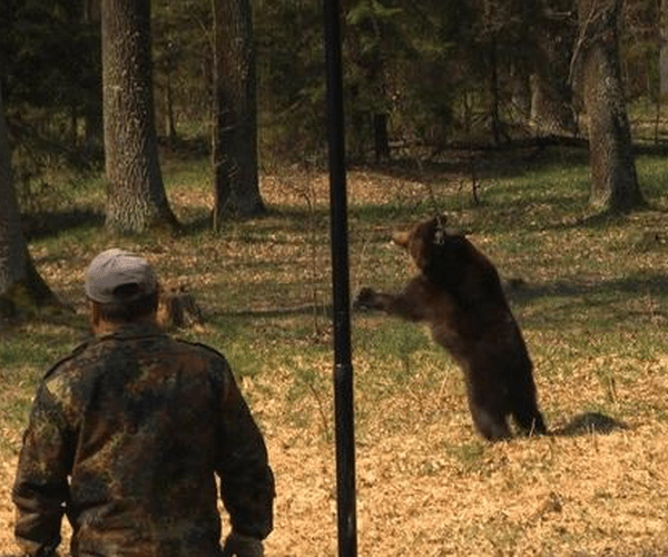 bear baiting ukraine