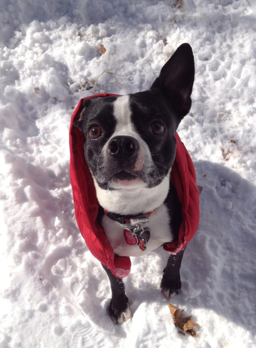 cute dog in red outfit in snow