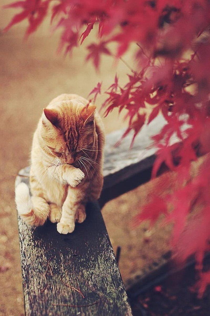 Warning: Dangerous pet food storage bin a death trap, cat dies trying to escape