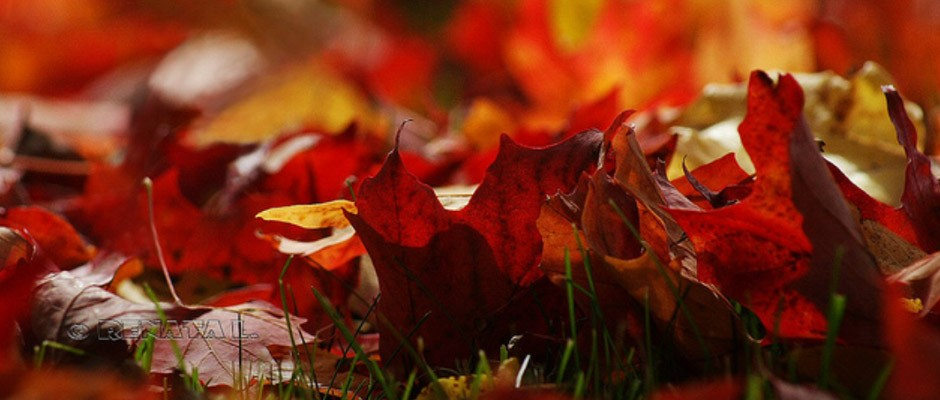 autumn05