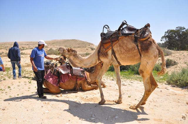 Negev Desert Camel Ride at Sfinat Hamidbar