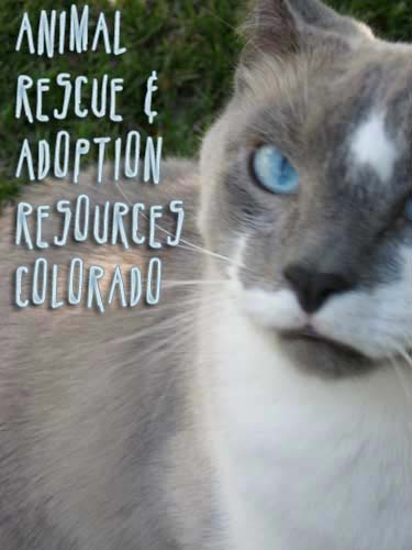 Animal Rescue shelters adoption Resources Cat Photo