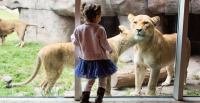 Zoo Field Trips Get Boost From Oregon College Savings Plan