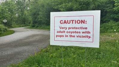 coyote-precaution-sign-web