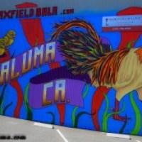 Videos: Chelsea Carl and Maxfield Bala Create 0+ (Positive) Festival Videos