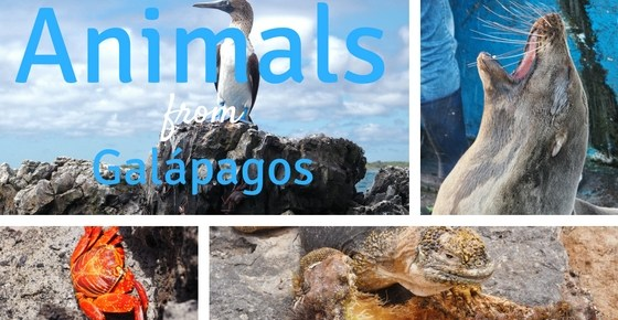 Animals of Galapagos
