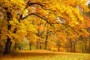 seasonal depression, seasonal affective disorder