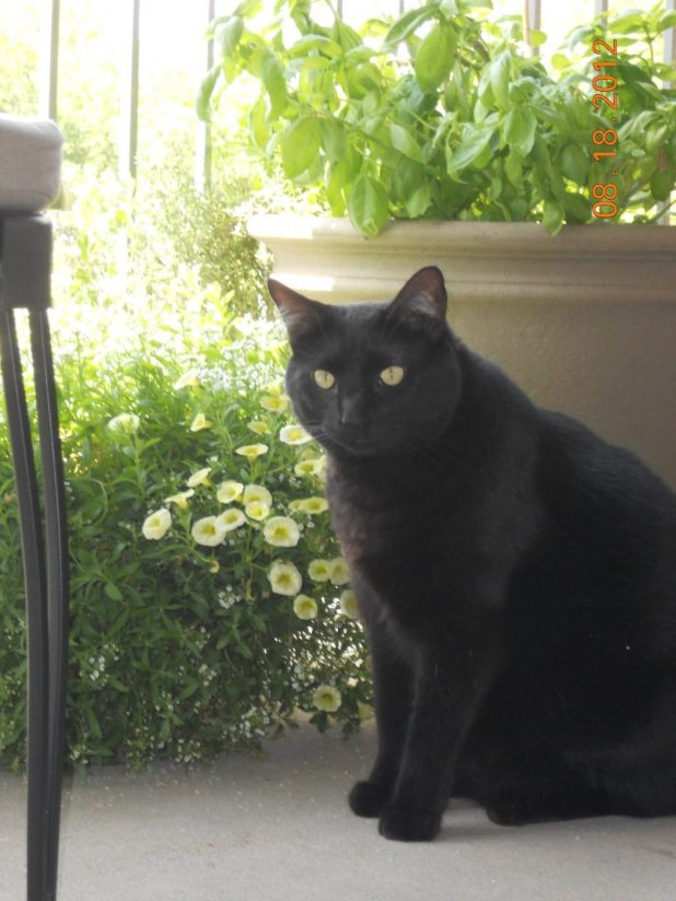 in The Most Beautiful Black Cats