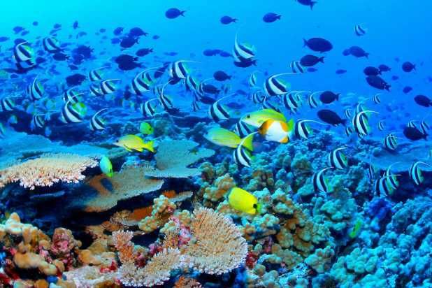Great_Barrier_Reef_Biodiversity Top 10 Places to Visit in 2014