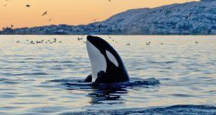 o-ORCA-facebook