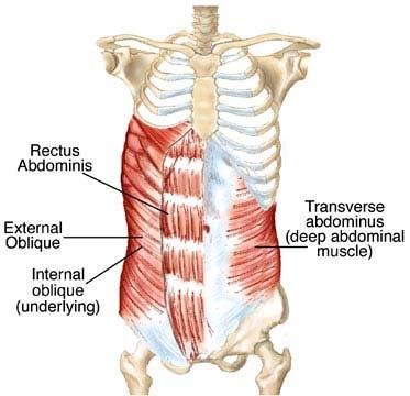 core muscles, bracing the core when you squat