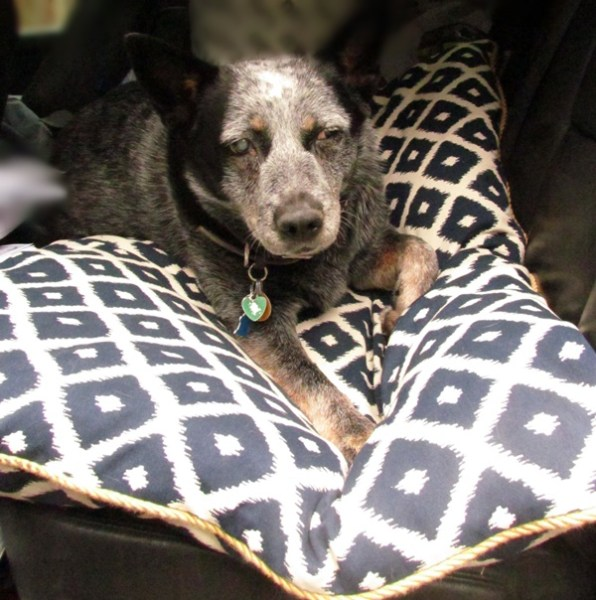 up country pet futon Luna
