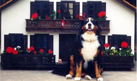 Dog House 9