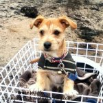puppy in the basket of a bike illustrating an article about seasonal affectve disorder and writers