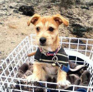 puppy-in-bike-basket