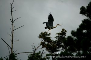 heron on a tree illustrating an article on mindfulness