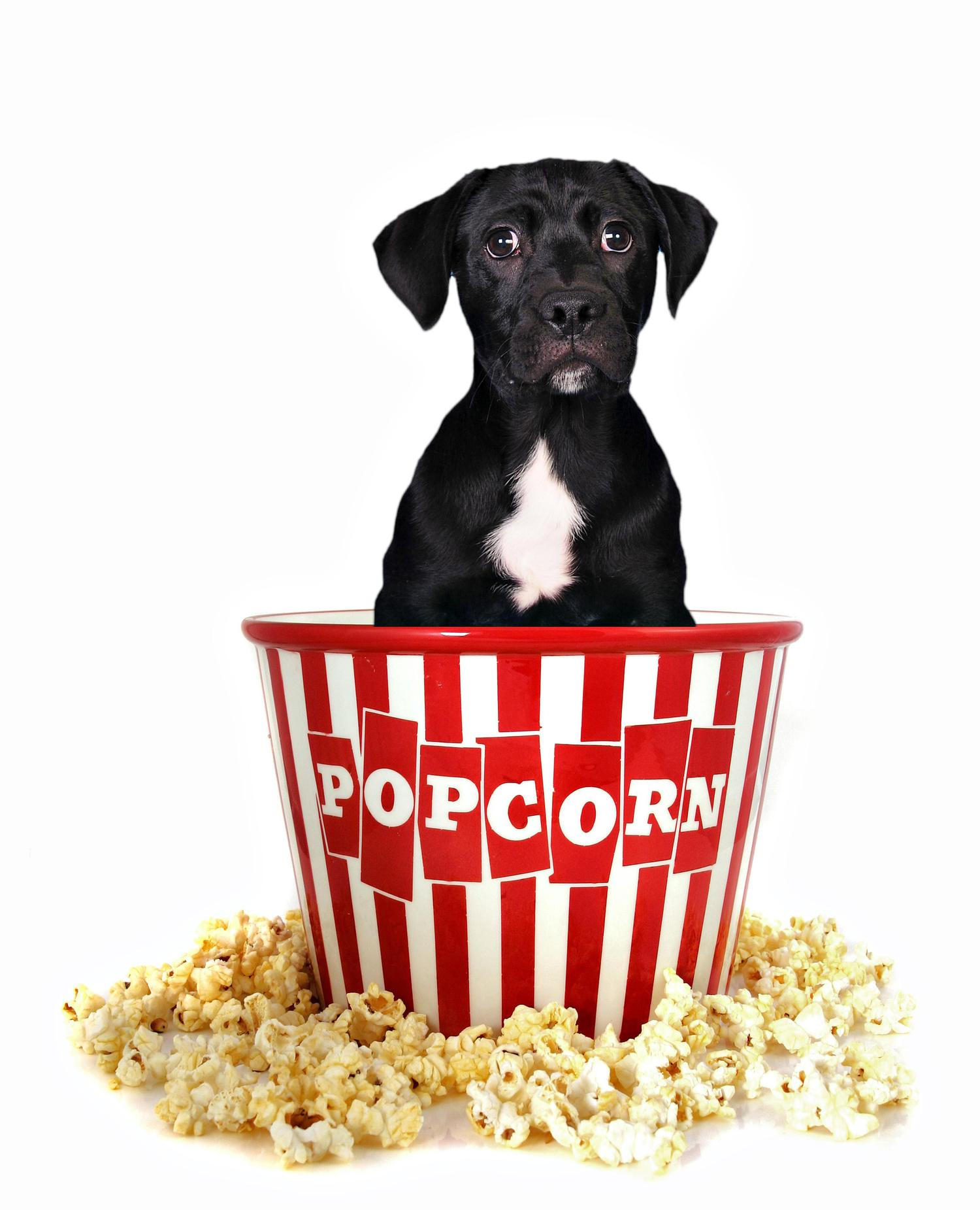 Fullsize Of Can Dogs Have Popcorn