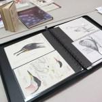 Shorebird_Bird_Anatomy_2014 (2)