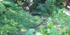 Creek walk (1)