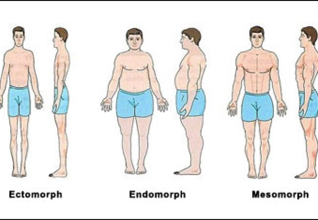 How To Eat Right For Your Body Type Ectomorph Mesomorph