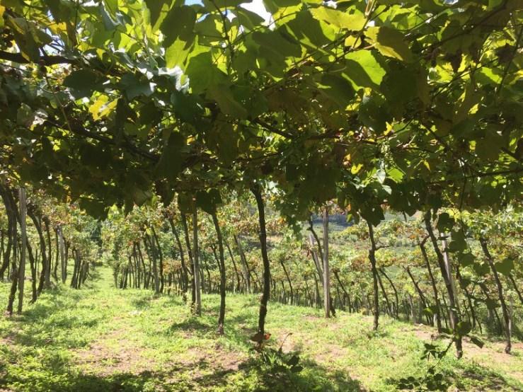 vinicolas-casa-valduga