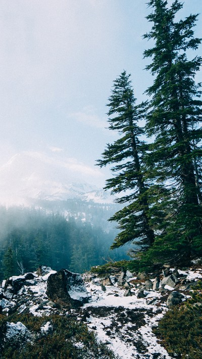 Back to Nature iPhone Wallpaper Collection | Preppy Wallpapers