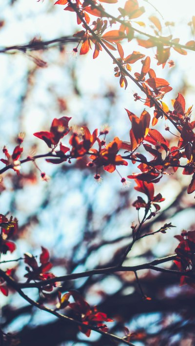 8 Free Autumn Inspired iPhone 7 Plus Wallpapers | Preppy Wallpapers