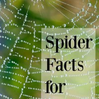 20 Fun Spider Facts for Preschoolers
