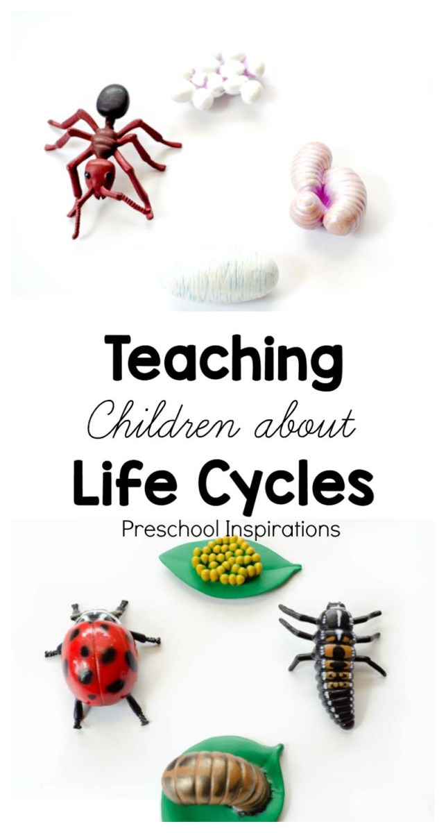 Teaching Children about Life Cycles