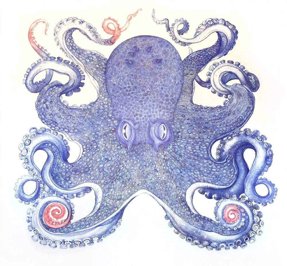 Octopus by Ray Cicin