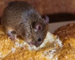 DIY pet friendly mouse/rat trap.