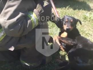 Perro rescatado en Morón
