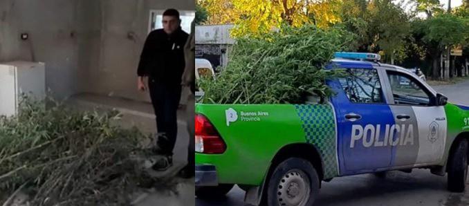 Plantas de marihuana en Castelar