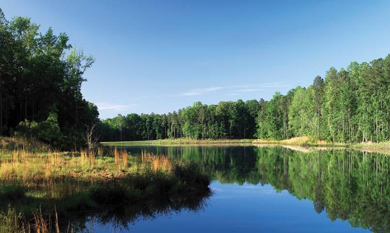 Fishing Hasentree Club Pond Wake Forest North Carolina