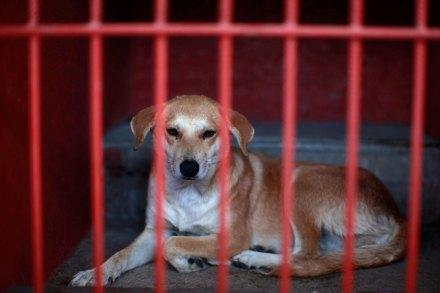Uno de los perros atrapados en Iztapalapa. Foto: AP / Dario López-Mills