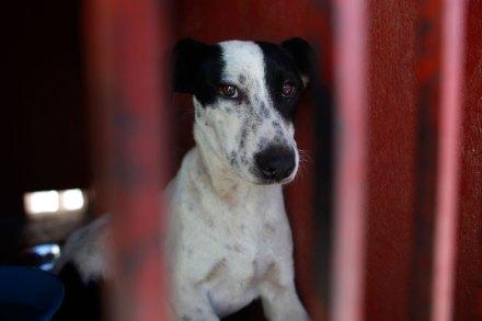 Uno de los perros capturados en Iztapalapa. Foto: AP / Dario López-Mills