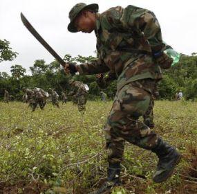Militares erradican un plantío de coca en Shinahota, Bolivia. Foto: AP