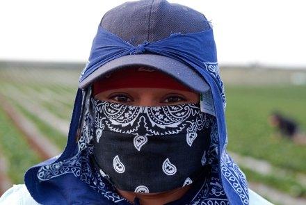 Una mujer jornalera en San Quintín. Foto: Antonio Nava
