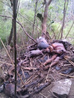 De Quince Personas son los restos Óseos hallados en una fosa en Veracruz. Cuerpos-emiliano-zapata-y-maltrata