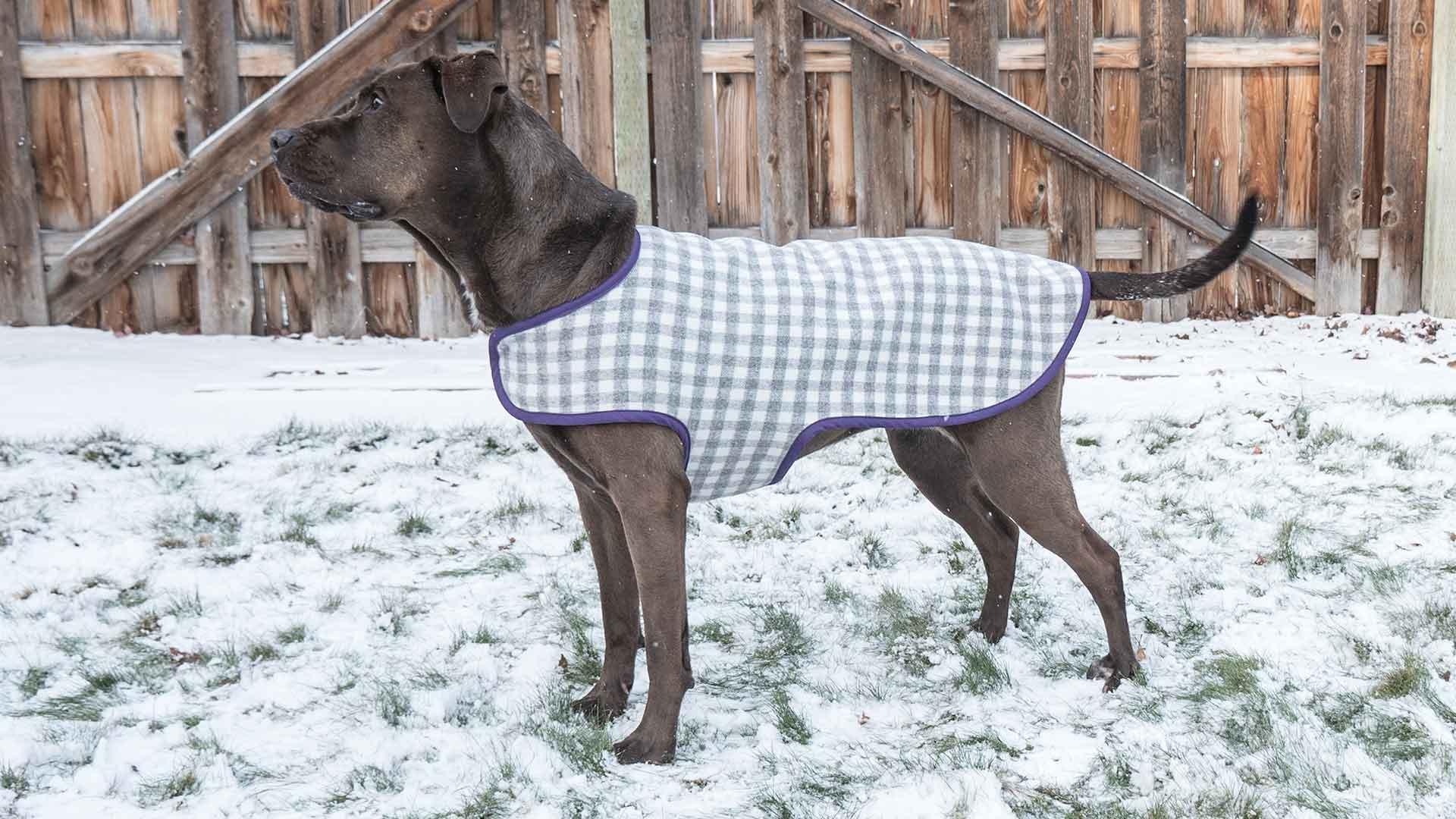Fullsize Of Dog Coat Pattern
