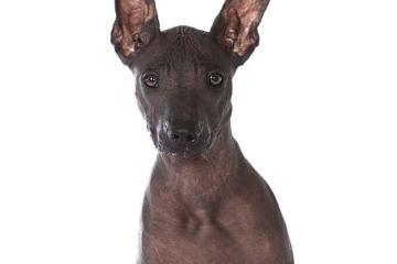 dog-142