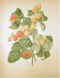 frutto-3gra