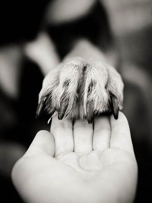 Donativos Protectora Doggy