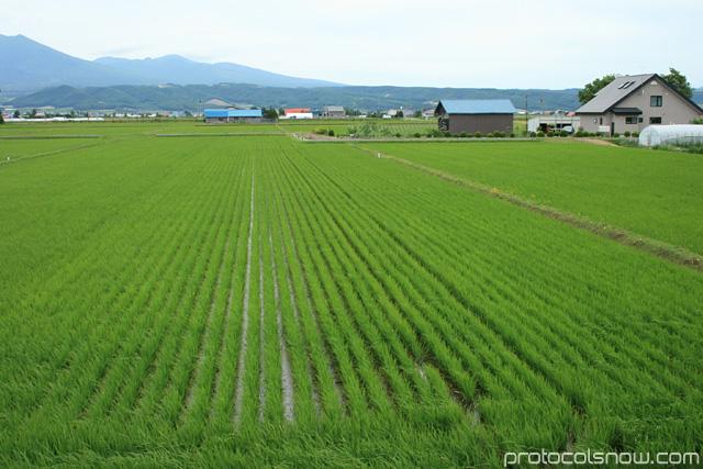Hokkaido Japan rice fields