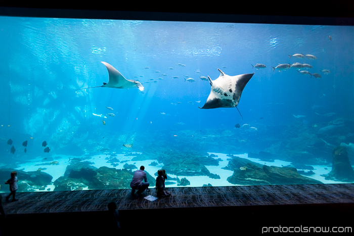 Atlanta Aquarium Ocean Voyager largest tank habitat manta ray