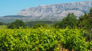 Vineyards at the foot of Mont Sainte Victoire