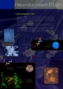 Neurotrasmettitori veloci